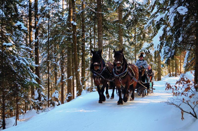 pferdekutschen-winter-abtenau-16